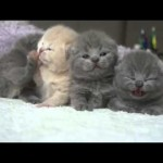 Cute Kittens Waking Up From Nap