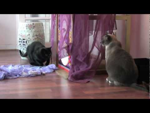 Backwards Day – Cats in Reverse – Furball Fables