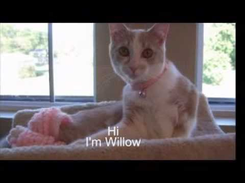 Willow and Leggings For Life for Special Needs Kitties