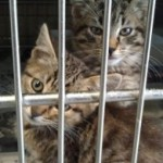 Cat Group Opposes Repeal of California's Life Saving Hayden Shelter Law