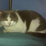 Sir Patrick: Joplin Tornado Cat Is Home At Last