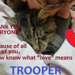 Trooper, Injured Kitty Frozen to the Ground Saved By Rescuer
