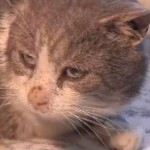 10 Lives Club Helps Boston, a Stray Cat Injured by the Wire Wrapped Around Him