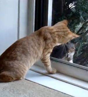 Irritable Squirrel Taunts Sweet Kitty