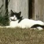 Neighbors Upset as Cat Eating Butcher Goes Free