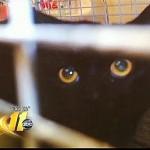 Operation Catnip Sues Over Wake County Cat Roundup