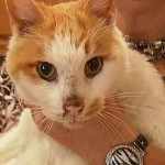 Snowbell Returns Home After 3 Years Thanks to Luck and a Microchip