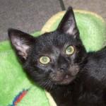Zamboni the Special Kitten