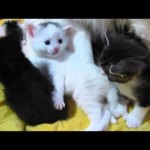 Mamas and their Newborn Kittens