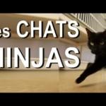 Les Chats Ninjas