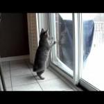 Snow Storm – A Cat's Curiosity