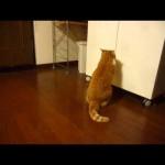 Cat vs Cupboard Door