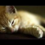 A Cat's Life – The Kitten