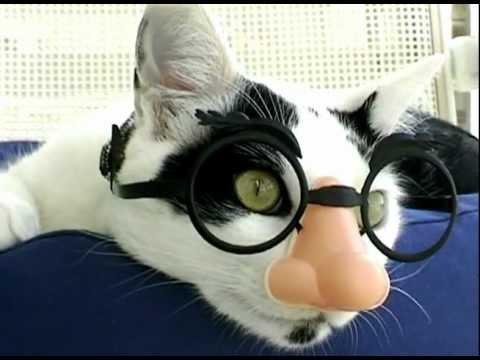 Laid Back Incognito Cat