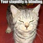 FUNNY, SILLY CATS