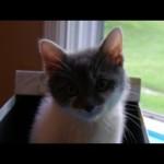 Kitten to Cat – Leo's First Birthday