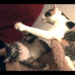 Epic Cat Tower Battle