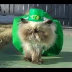 Miracle Leprechaun's St. Patrick's Day Walk