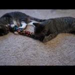 "Oskar the Blind Cat and Klaus Test Out ""Kitty Kick Stix"" Catnip Toy"