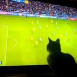 Cat Follows Teeny Tiny Football