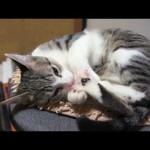 Ohagi, in Cat's Paw