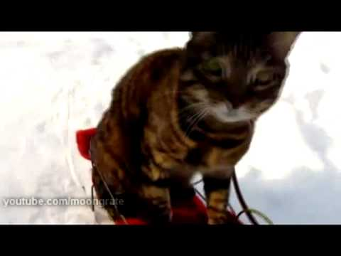 The Sled Riding Cat