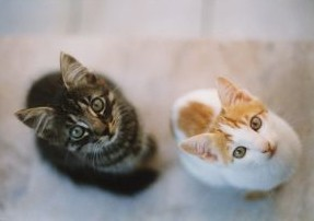 How to Resolve a Litter Box Problem