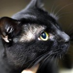 Victory for Lennox: A Sweet Cat's Life is Saved