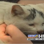Family and Neighbors Upset as Firefighters Refuse to Rescue Cat From Tree