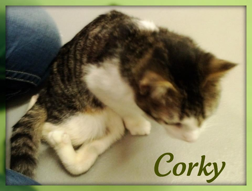Special Needs Kitty Corky Finds Caring Friends at CATS Cradle