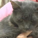 Hobo, Namesake of Hobo Hotel for Cats, Celebrates Her 26th Birthday