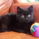 Harry Potter, Kitten who Escaped Abuse and Danger, is adopted!
