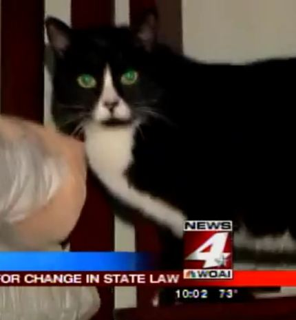 Texas Woman Wants Change in State Law After Incident With Her Cat