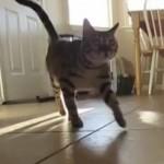 Feline Exercise Plan