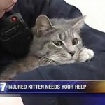 Caring Animal Control Staff Helps Injured Kitten