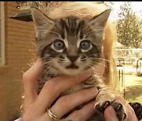 Good Samaritans Join to Rescue KittenTrapped in Storm Drain