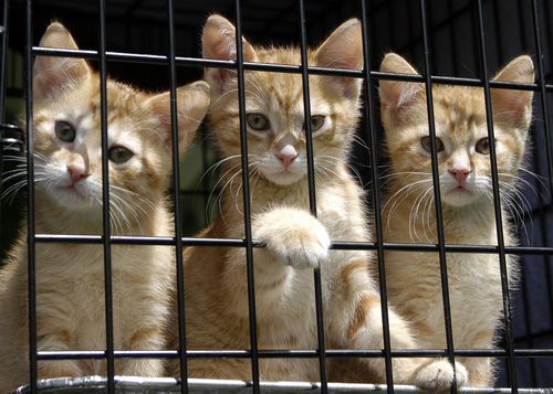 PA Senate Unanimous in Vote to Outlaw Gassing of Companion Animals