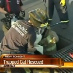 Trapped Kitten is Rescued and Finds a Home