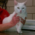 Boston Cat Survives 19 Floor Fall During Early Spring Warmup