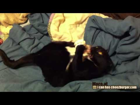 Cat Bunny Kicking Himself in the Face