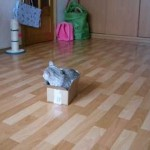 Dusya the Cat Looks for a Place to Stay