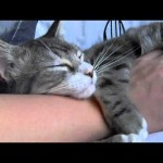 Cute Sleeping Kitten Hugs Owner's Arm While Getting A Belly Rub!