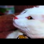 Profile of a Famous Internet Cat: Jupiter the Video Star