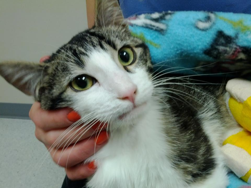 Corky Special Needs Kitty: Recovering From Remarkable Leg Surgery