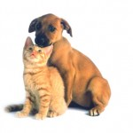 Five Heartworm Prevention Tips for Pet Owners