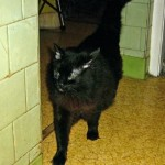 Bank Saves Cat's Life From Euthanization Stipulated in Terms of Owner's Will