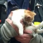 Carlow the Missing Firehouse Cat is Found