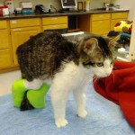 Corky: Up On His Feet for The First Time Ever!