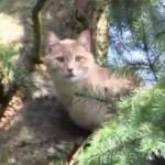 Neighbors Hire Arborist to Rescue Cat Stuck Up Tree for 5 Days