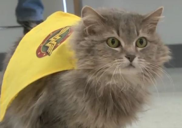 Supurr Friends for Felines in Salt Lake City Kicks Off Drive to Increase Cat Adoptions